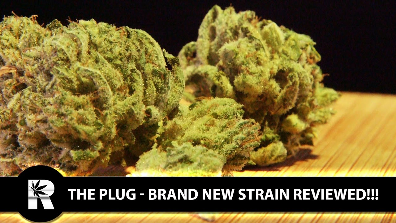 Cannabis Up Close #12: The Plug (New Strain) from OG Cali Buds