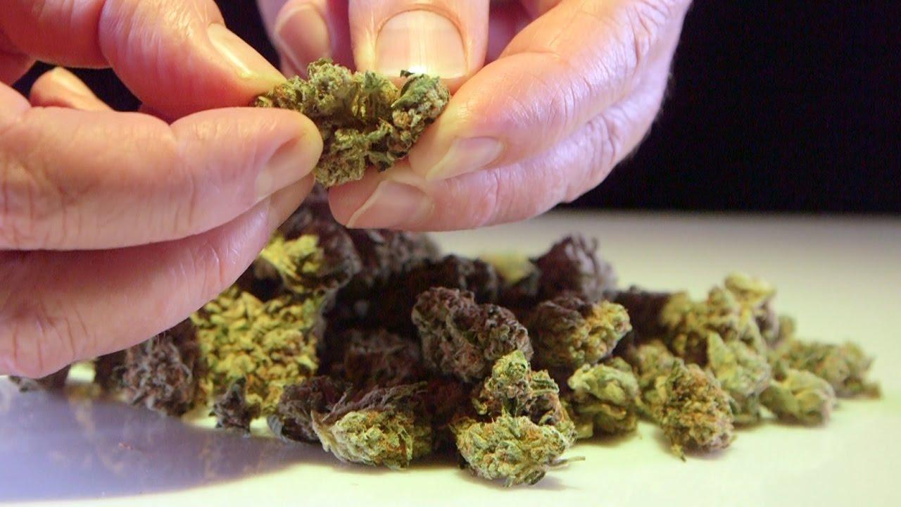 Cannabis Up Close #13: Original El Chapo OG Strain Overview