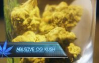 Cannabis Up Close #3: Abusive OG Kush Strain (Indica) – Strain Review