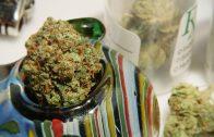 Cannabis Infused Vegan Chocolate Chip Cookies