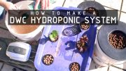 how-to-make-deep-water-hydroponics-system-cannabasics-105-thumbnail