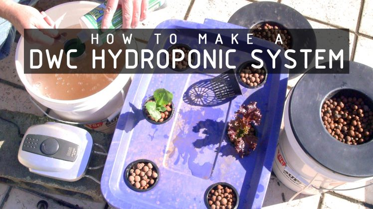 How To Make a Deep Water Culture (DWC) Hydroponics System