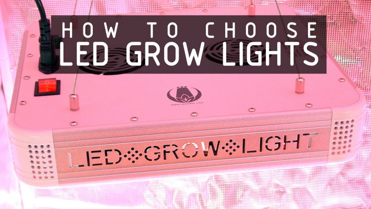 How To Choose LED Lights To Grow Cannabis: Cannabasics #108