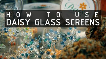 how-to-use-and-clean-daisy-glass-screens-thumbnail